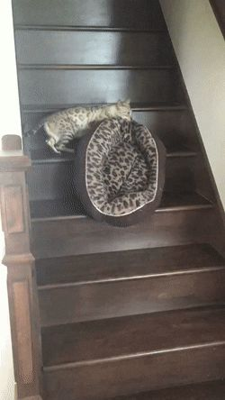 Carrying her bed up the stairs http://ift.tt/2urRPDx
