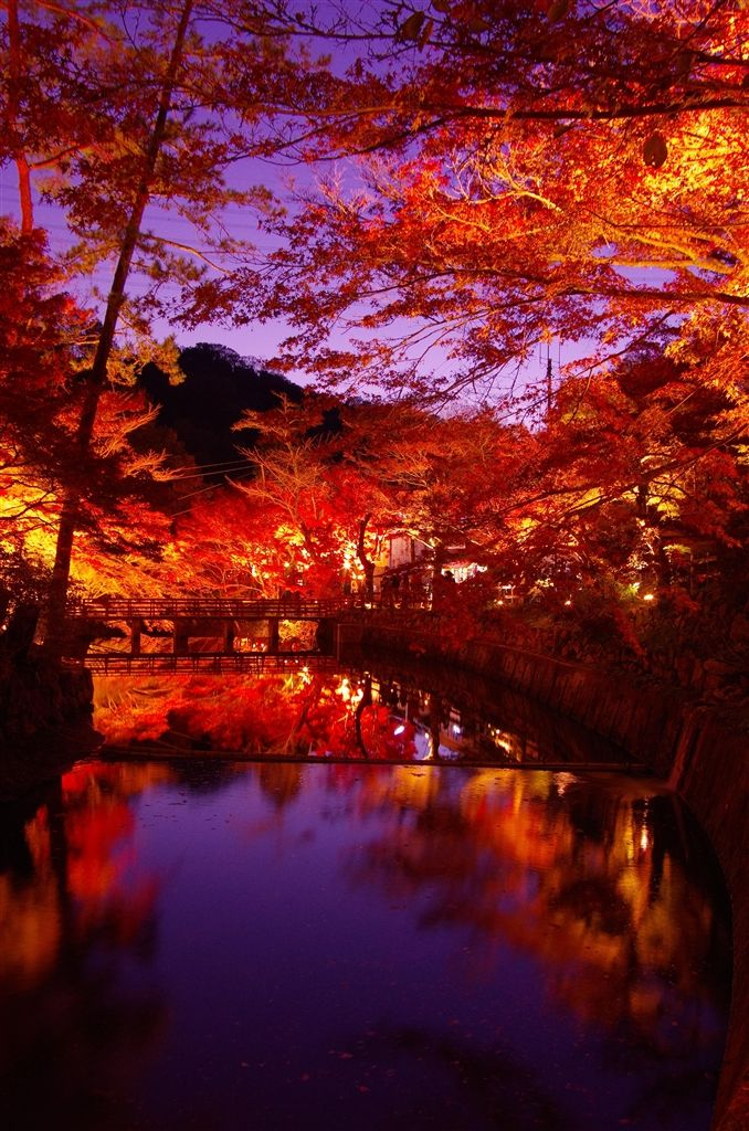 Autumn leaves - Iwayado Ppark, Seto, Aichi, Japan