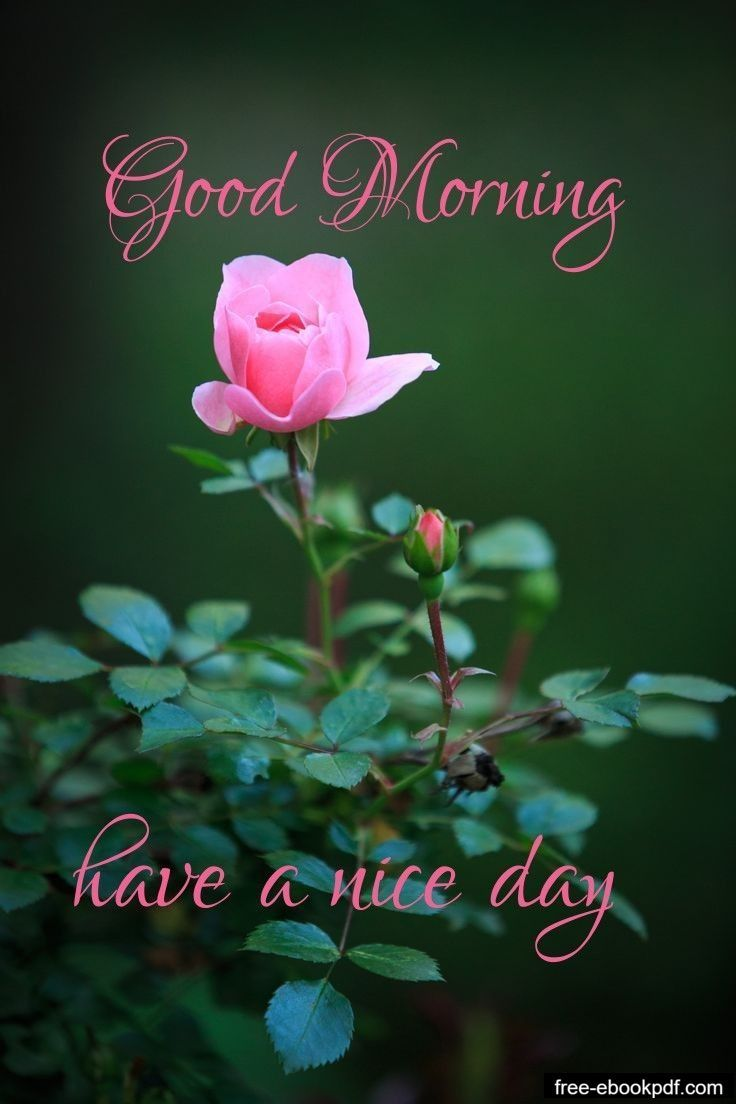 Sweet Good Morning Text Message For Her Good Morning Tuesday Good Morning Tuesday Images Very Good Morning Images