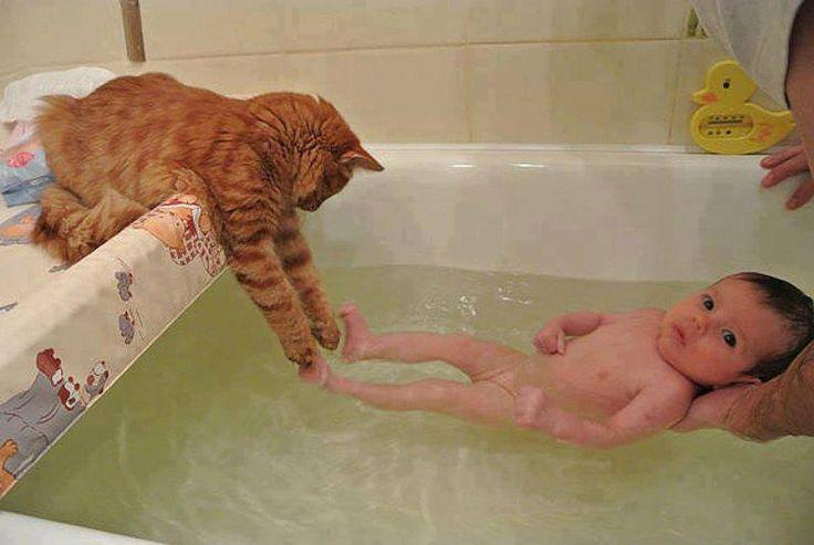 Here...I'll wash his feet - Orange tabby cat and baby in bathtub