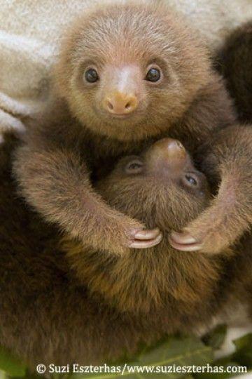 visit sloth sanctuary