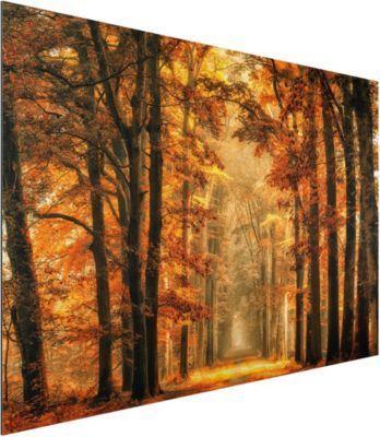 Alu Dibond Bild - Märchenwald im Herbst - Quer 2:3 50x75-22.00-PP-ADB-WH Jetzt bestellen unter: https://moebel.ladendirekt.de/dekoration/bilder-und-rahmen/bilder/?uid=3f24a066-6f37-5336-9dcc-c5067611540d&utm_source=pinterest&utm_medium=pin&utm_campaign=boards #heim #bilder #rahmen #dekoration