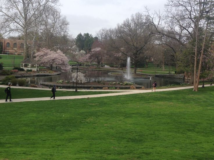spring time at the pond