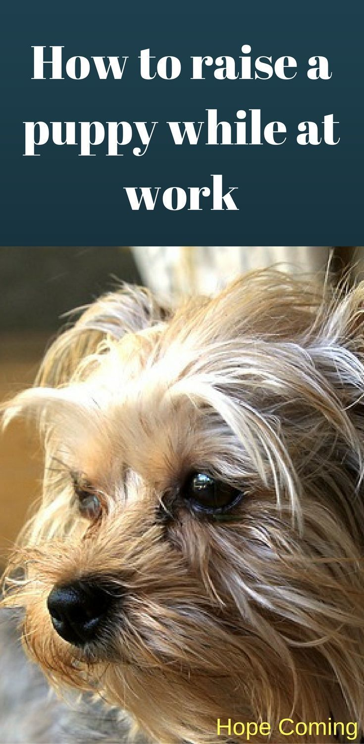 How to raise a puppy while at work | House Training a puppy | Potty Training | Paper Training | http://www.hope-coming.com/ #PuppyHouses