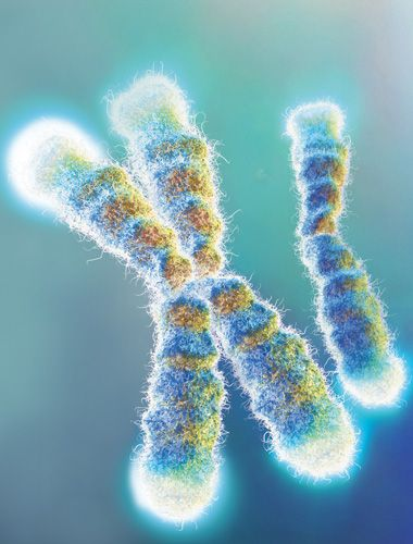 Telomeres in Disease  Telomeres have been linked to numerous diseases over the years, but how exactly short telomeres cause diseases and how medicine can prevent telomere erosion are still up for debate. TS-X is a Telomere Support Supplement. Longevity and Anti-Aging Research and Science from Sisel International. http://sizzlenow.mytsx.com/