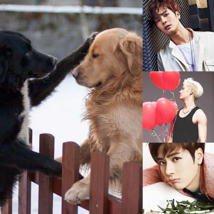 ChineseZodiac&KPOP // Dog // Jackson of  GOT7