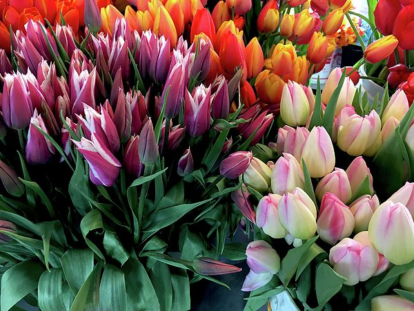 Tulips By Ivete Basso Photography Tulips Flowers Tulips Flowers