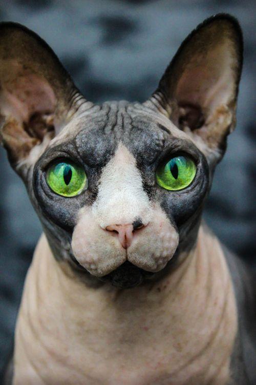 Simon's Cat - YouTube