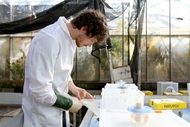 bee lab greenhouse