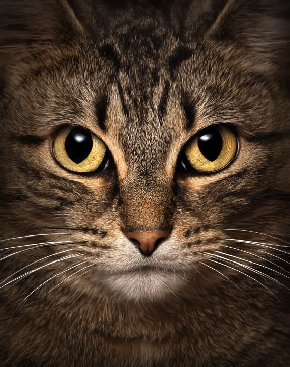 23 Awesome Cat Eye Photos : Natures Colors
