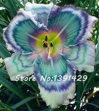 Nouveau!!! 50 Pcs Hollande Rainbow Hémérocalle Graines Rare Jour Lily Fleur Plante Jardin Exotique Plante Organique Graines De Légumes Peuvent Manger(China (Mainland))
