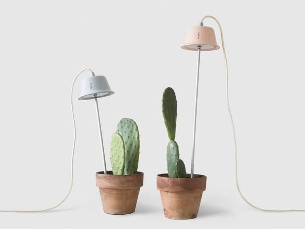 With Spring of 2016, the Cynara lampshade now comes in two new Pantone-inspired colours that  honoura spring awakening. A delicate Rose Quartz and a calming Blue Serenity are added with a hand-varnish to the same great Italian terracotta.  The stylish Cynara is a carefully crafted grow light that channels all the goodness of the sun's rays into a spotlight of energy efficient LED light (7W). Its handcrafted lampshade is well suited for the cultivation of small to medium-sized vegetables…