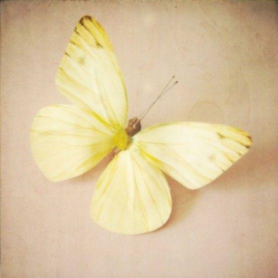 Inspiration creamy yellow