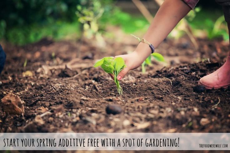 Start Your Spring Additive Free With A Spot Of Gardening! — The Food Werewolf thefoodwerewolf.com #additivefree #spring #gardening