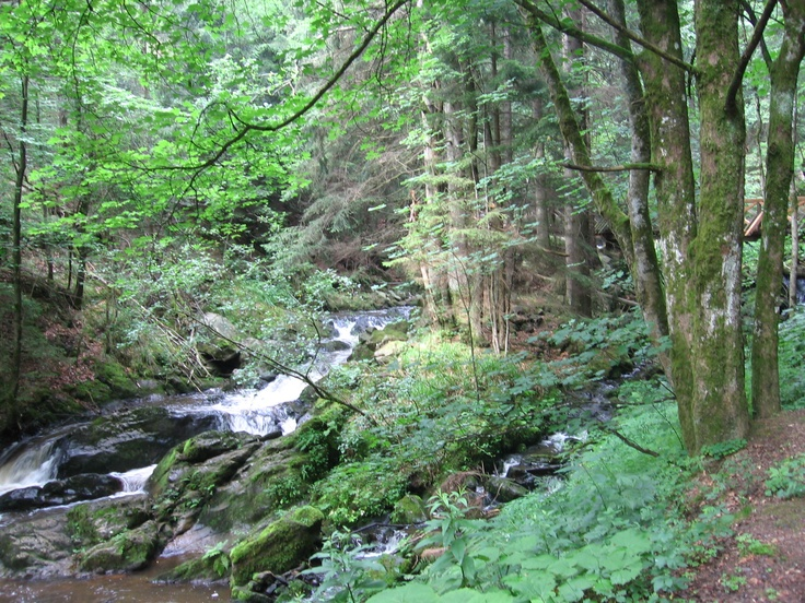 49 Best Black Forest Germany Images On Pinterest Black Forest Germany Germany And Forests
