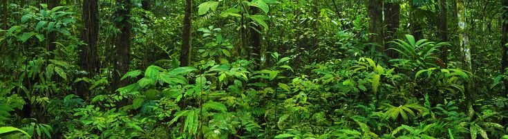 Understanding the Climate Impacts of the Tropical Forest Conservation Act