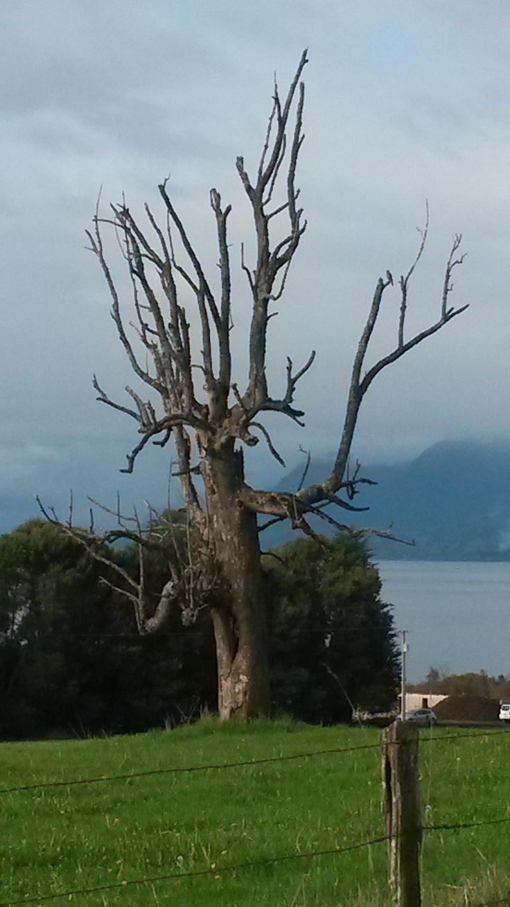 Puerto Nuevo, Lago Ranco, Chile