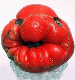 EN IMAGES. La revanche des «fruits et légumes moches»