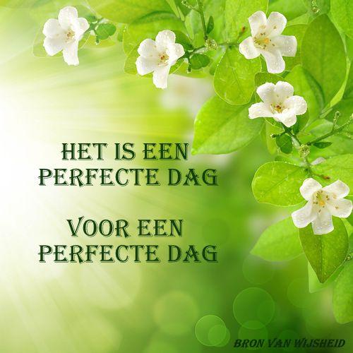 In feite gaat het om elke dag, die iedere ochtend weer voor onze voeten ligt.  Is niet alles perfect, dan zijn er altijd weer perfecte momenten in een on-perfecte dag.