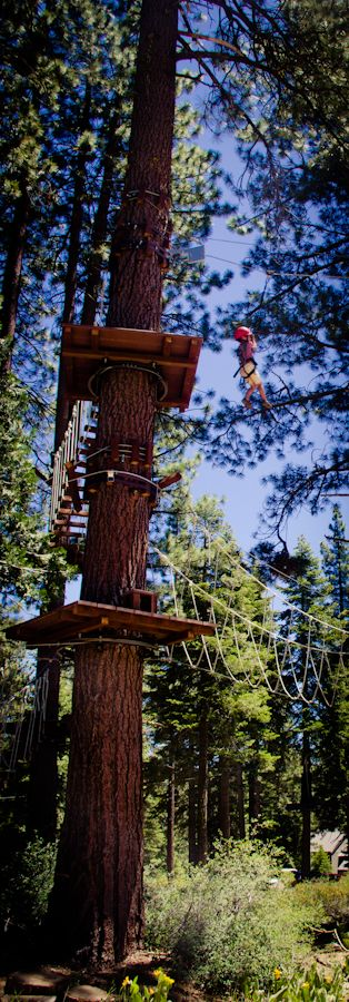 Great activity with kids, take them to Granlibakken in Tahoe City and swing from the trees in the Tahoe Tree Top Adventures. Photo by Erin Thiem, Outside Inn. Thanks, Erin! Pinned by www.CaliforniasHarvest.com