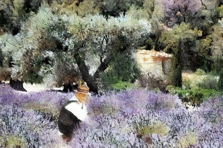 1000 images about lavendel on pinterest lavender tea for Au jardin des oliviers