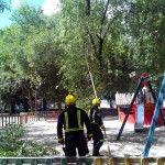 Pinto inicia una campaña para localizar árboles con riesgo de caídas de ramas  El ayuntamiento de Pinto, a través de la Concejalía de Seguridad y el servicio PIMER-Protección Civil, han puesto en marcha una campaña de identificación de árboles con riesgo de caída de ramas para evitar caídas incontroladas antes de que llegue la temporada de lluvias y fuertes vientos.