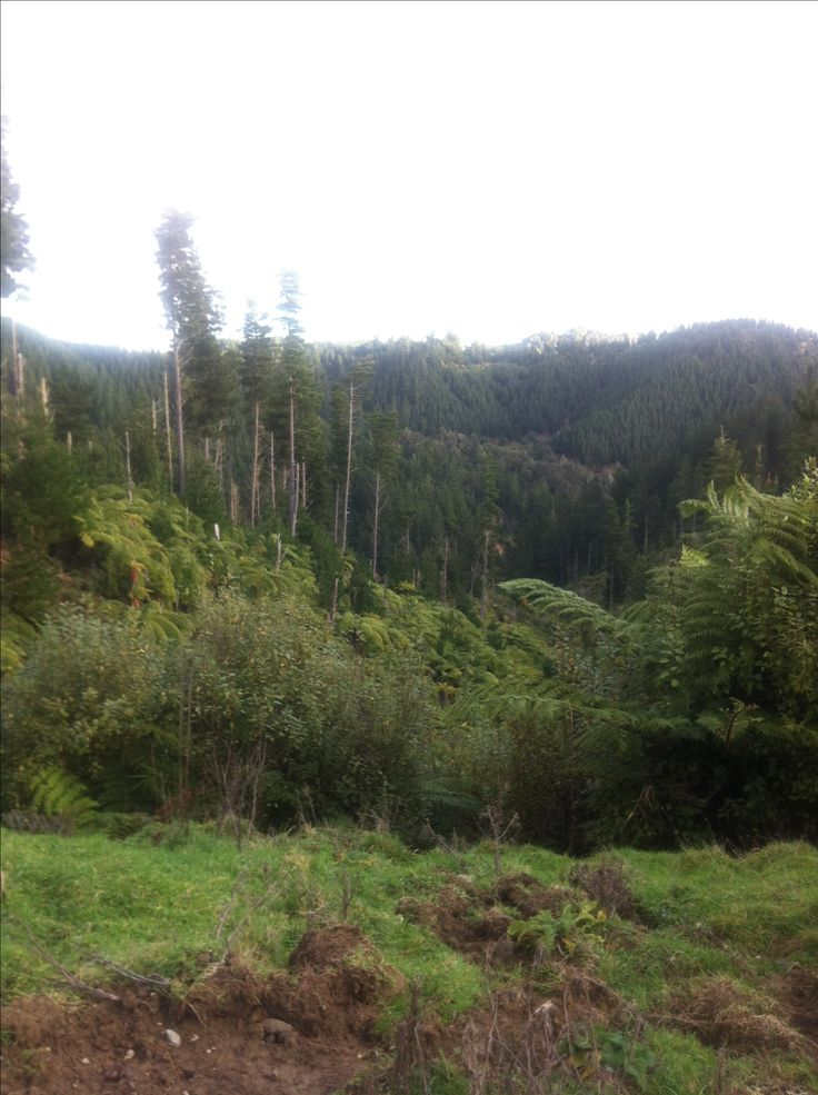 That's better can see now :) Waimarino forest also current home of the Kiwi :) New Zealand