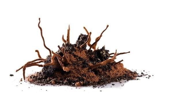 Raíces | Sorbete de mandarina con toffee de cardamomo, bizcocho de  chocolate con mousse de chocolate y yuzu, rocas de sésamo negro y  raíces de chocolate surgiendo de la tierra. #AlbertAdria #NaturaBook #dessert
