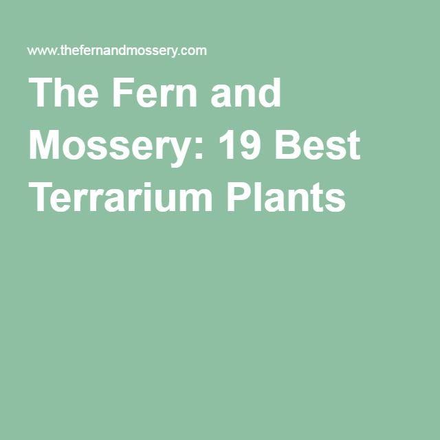 The Fern and Mossery: 19 Best Terrarium Plants
