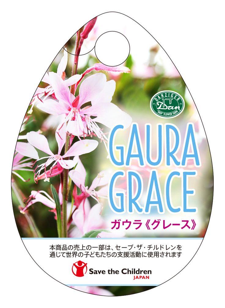 ガウラ 《グレース》  Gaura Grace   高松商事株式会社