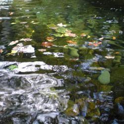 Merlin's Pool, Dinas Emrys