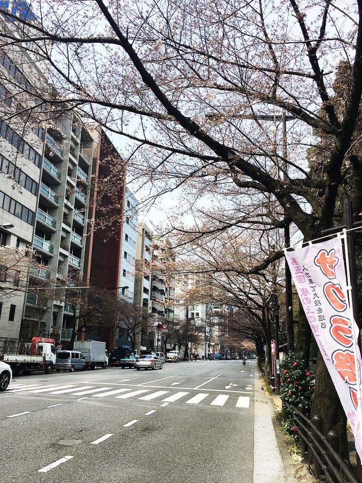 【編集者M】靖国通りの桜は今週末には満開かな?と思っていたのですが、8分咲きくらいになりそうな雰囲気です靖国神社はまだまだこれからの様子でした。4月に入ってから満開の桜が楽しめると思えば、これはこれでありなのかもしれませんね