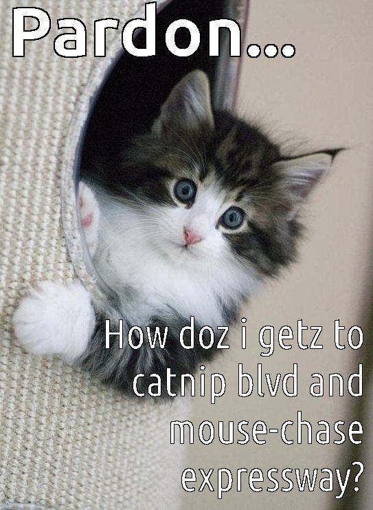 Cat In Tumble Dryer Meme