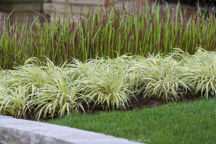 Golden japanese forest grass hakonechloa macra 39 aureola for Japanese grass