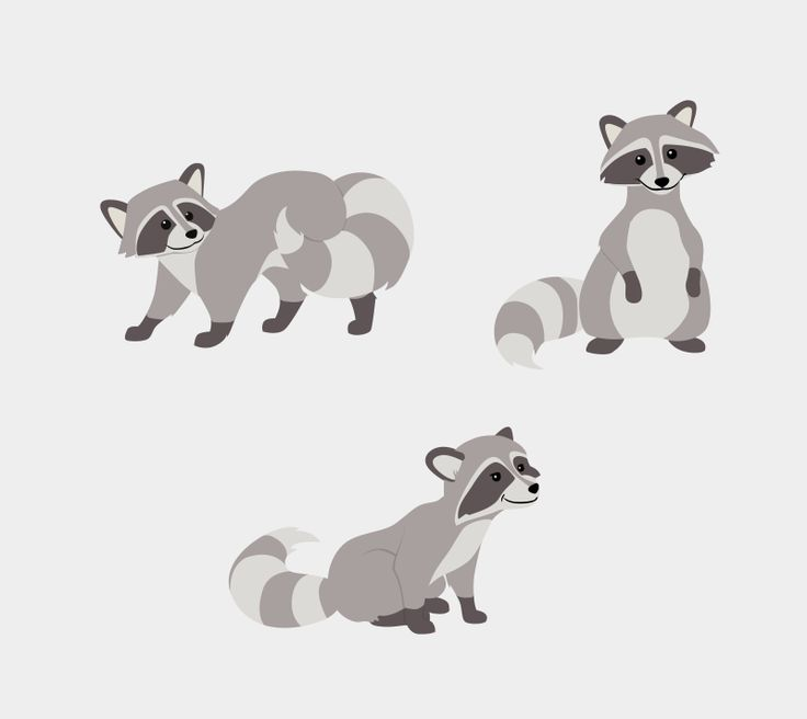 raccoon illustration - Google Search                                                                                                                                                                                 More