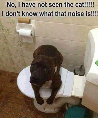 """No, I have not seen the cat!!! I don't know what that noise is!!! ~ Dog Shaming shame - - Funny dog funny cute animals cat dog lol funny quotes puppies humor"