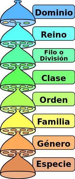 Categorias taxonomicas es - Categoría taxonómica - Wikipedia, la enciclopedia libre