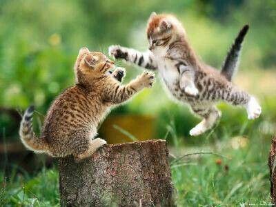 Vy koťata