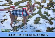What is the Best Dog Coat for Winter? We answer your question about winter coats for your dog and have a giveaway.  These coats are weatherproof, waterproof, reflective, and can be layered.