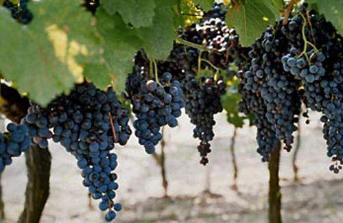 Top 10 Grape Getaways