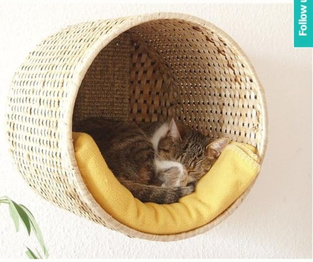 DIY cat bed, how in the world did I never think of this?!?