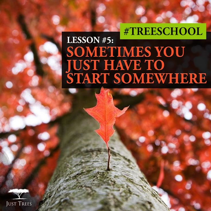 Lesson 5: Sometimes you just have to start somewhere #TreeSchool