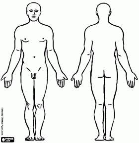 De man. Mannelijke menselijk lichaam van voor en achterkant kleurplaat