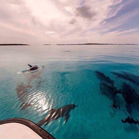 Imagen de dolphin, ocean, and summer