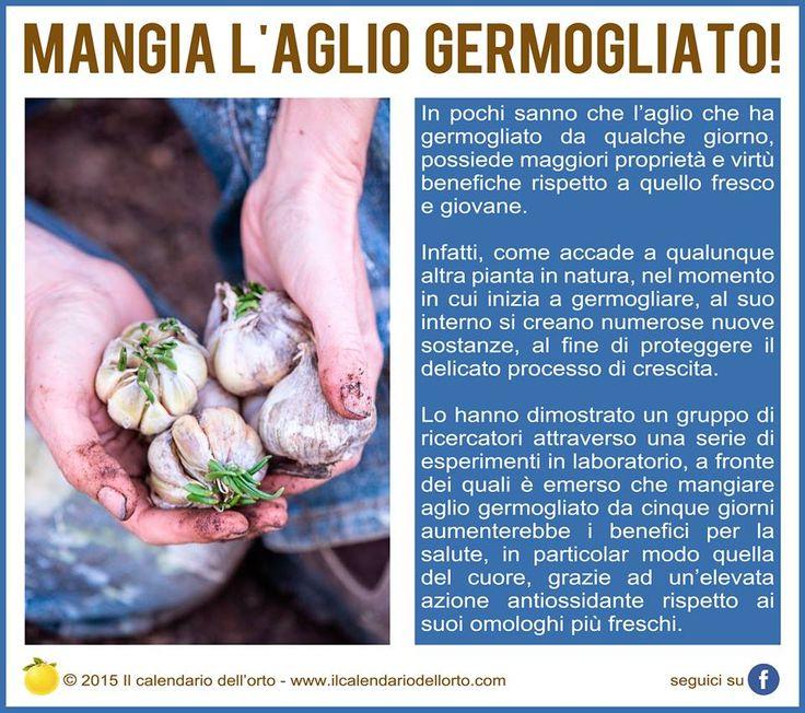 Mangia l'aglio germogliato