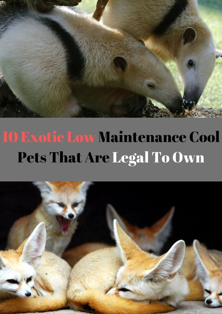 Pin On Animals Pets