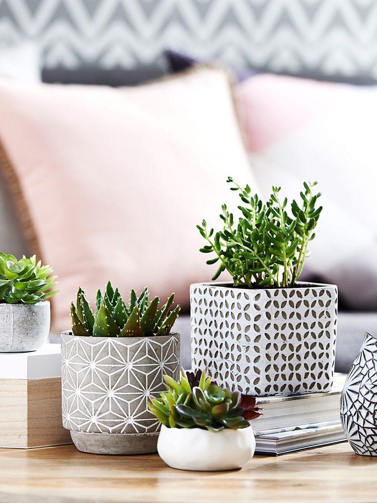Mini green plants in living room via bedbathntable