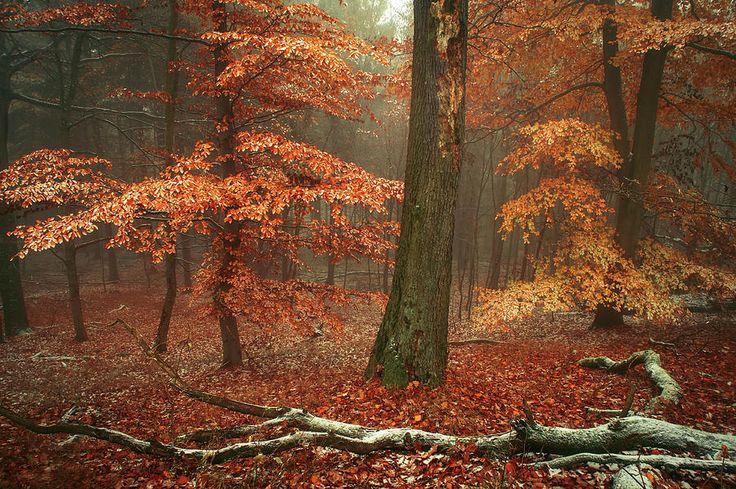 Magic Of Fall Woods by Jenny Rainbow