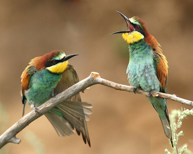 Pin Von Christine Potocar Auf Birdies Foto Bilder Fotos