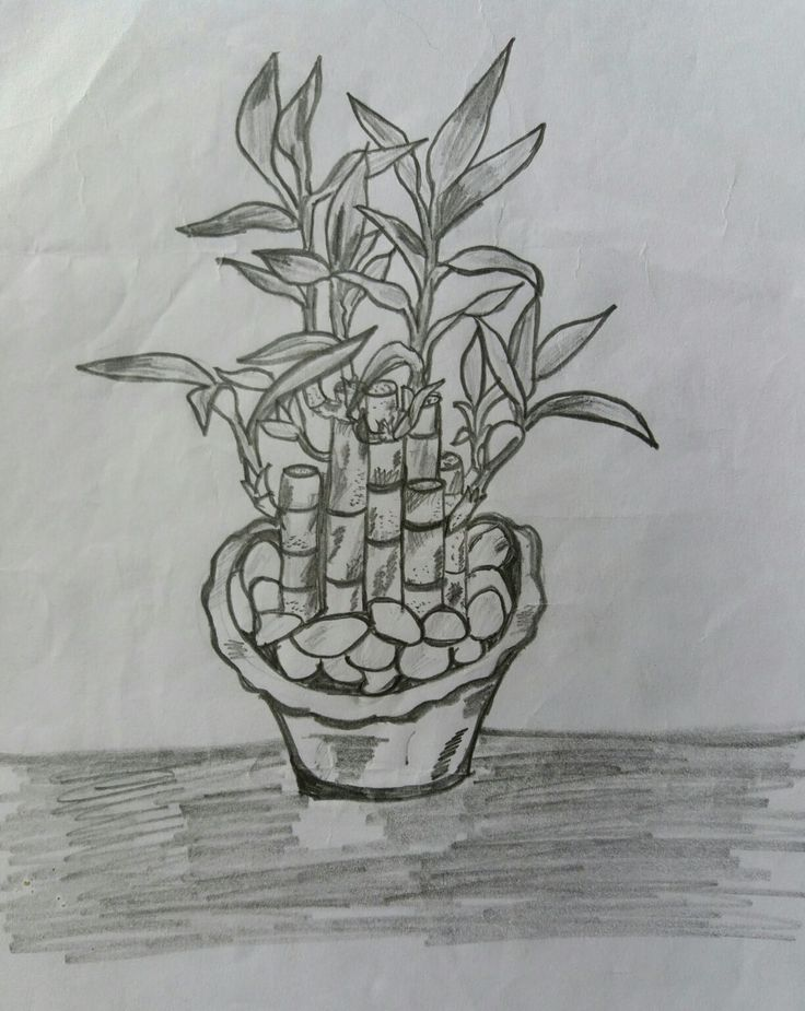 My lucky plant